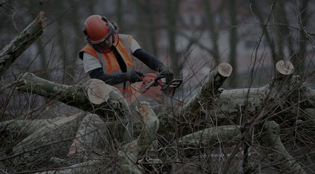 Aston Tree Service
